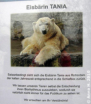 Info, warum man Tania kaum sieht, 28. November 2010