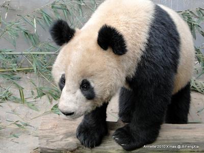 Fu Long, Bi Feng Xia, 25. Dezember 2010