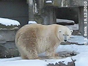 Tania, 19. Dezember 2010