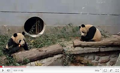 Fu Long und Wu Jie bei ihrer Weihnachtsjause, Weihnachten 2010 in Bi Feng Xia (Screenshot aus Video)
