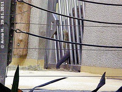 ... Numbi rüsselt zurück ..., 29. Jänner 2011