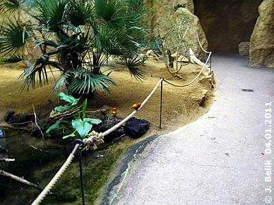 Oryxweber bei der Wasserstelle in der Savanne, 4. Jänner 2011