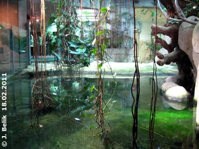 Blick auf den Pool der Riesenschildkröten im Kroko-Pavillon, 18. Februar 2011