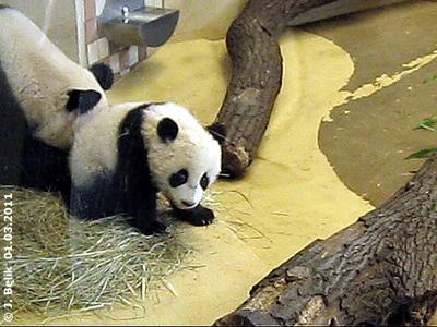 Fu Hu, 6 Moante alt, 1. März 2011