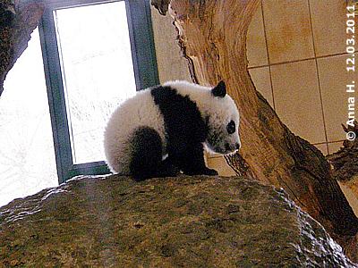 Fu Hu, 12. März 2011