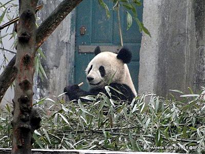 Die Ähnlichkeit mit seinen Eltern ist nicht zu übersehen! Fu Long, 5. März 2011