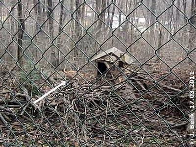 Durch die gute Tarnung ist der zweite Luchs nur schwer zu entdecken, 17. März 2011