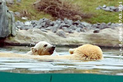 Olinka und Vicks bei der ersten Schwimmenstunde, 17. März 2011