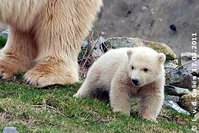 Baby Vicks, 17. März 2011