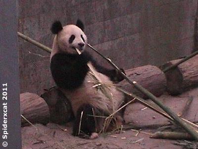 Fu Long, 30. April 2011