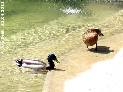 Diesem Pärchen gefällt es im Nashorn-Park, 22. April 2011
