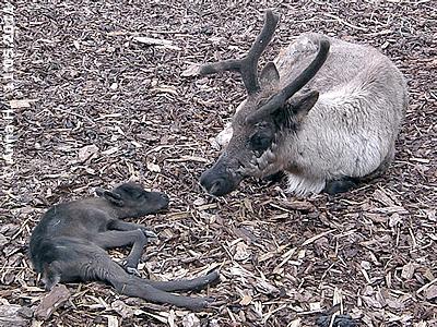 Mama mit Baby #4, 11. Mai 2011