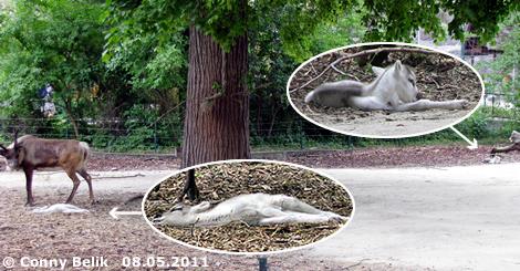 Baby #1 (li, es schläft tief und fest) und Baby #2 (re), 8. Mai 2011