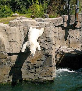 Arktos, der Klippenspringer, im Zoo Hannover, 4. Juni 2011
