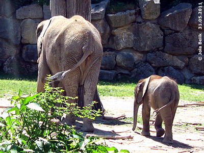 Mama Numbi und Söhnchen Tuluba, 10 Monate alt, 31. März 2011