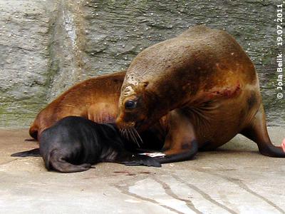 Enya mit ihrem Baby, 19. Juli 2011