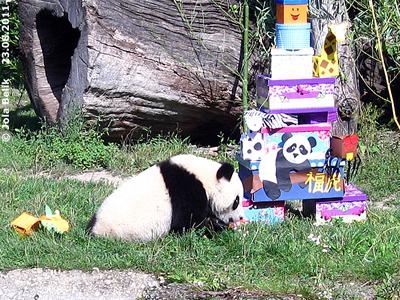 Fu Hu und seine Geschenke, 23. August 2011