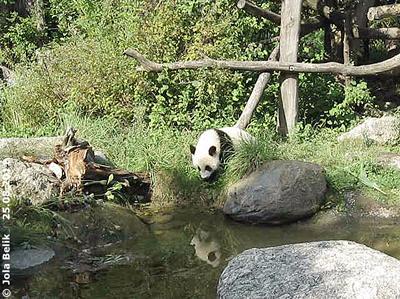 Fu Hu, ein Jahr alt, 25. August 2011