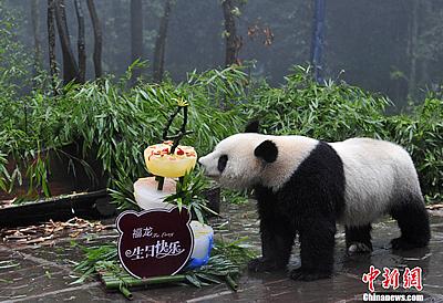 Fu Long mit Torte, Bi Feng Xia, 21. August 2011