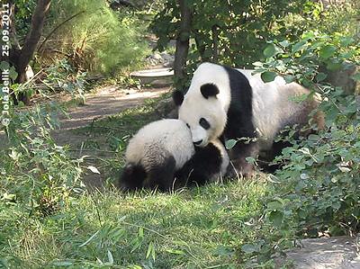 Mama YAng YAng nerven ist immer lustig! Baby Monster Fu Hu mit Mama Yang Yang, 25. AUgust 2011