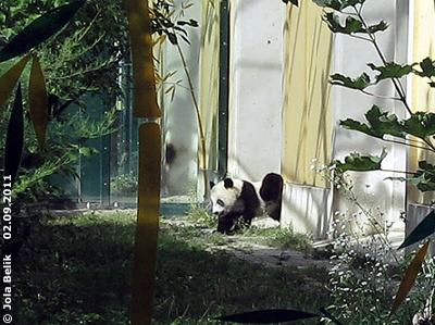 ... Pandakind Fu Hu ...