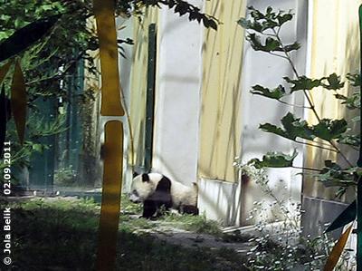 ... dann wird der Duft verteilt! Fu Hu, 2. September 2011