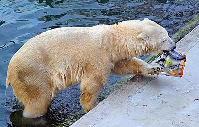 Tania im Zoo Budapest, Oktober 2011 (Foto: Bagosi Zoltán / Zoo Budapest)