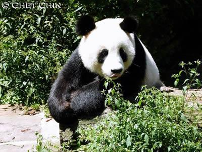 """""""Unser"""" Glücklicher Drache an seinem 4. Geburtstag in Bi Feng Xia, 23. August 2011"""
