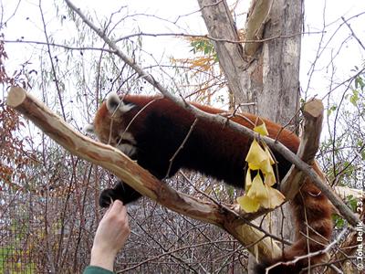 Dieses Stück mag ich auch haben! Panda-Weibchen, 23. November 2011
