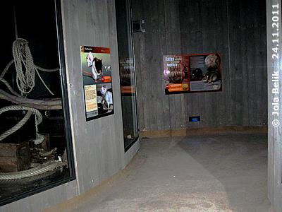 Blick Richtung Ausgang. die Farbratten sind auf der linken Seite, Rattenhaus, 24. November 2011