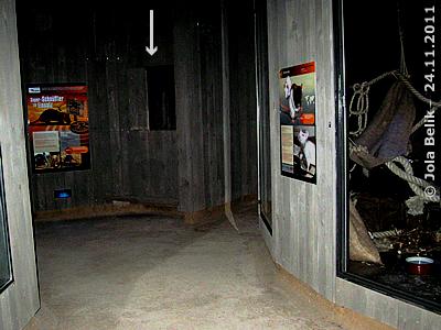 Blick Richtung Ecke gleich nach dem Eingang rechts, beim Pfeil befindet sich ein Monitor, der ein Video über die Arbeit der Riesenhamsterratten beim Aufspüren von Landminen zeigt, die Anlage der Farbratten rechts, Rattenhaus, 24. November 2011
