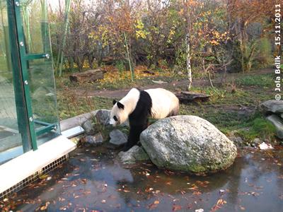 Mama Yang Yang, 15. November 2011