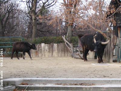 Otto (re) und der Bub (li), 9. Dezember 2011