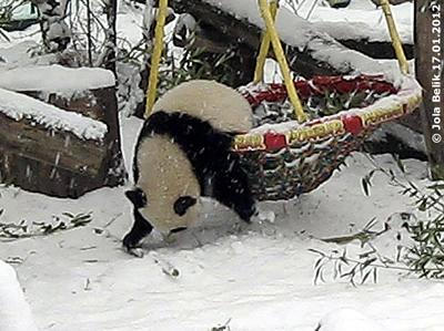 ... umso lustiger ist es, dem kleinen Kerl zuzuschauen! Fu Hu, 17. Jänner 2012