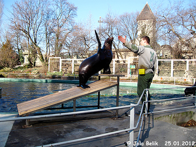 Training/Fütterung bei den beiden Robben-Buben, Zoo Budapest, 25. Jänner 2012