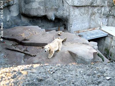 Tania im oberen teil der Anlage, re hinten ist die Brücke zwischen den beiden teilen gut zu sehen, Blick auf die Analge von der Besucherterrasse aus, Zoo Budapest, 25. Jänner 2012