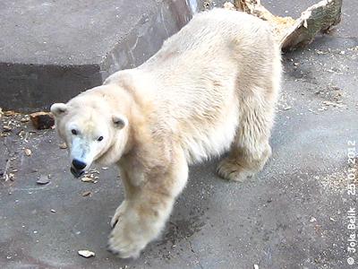 Tania, Zoo Budapest, 25. Jänner 2012
