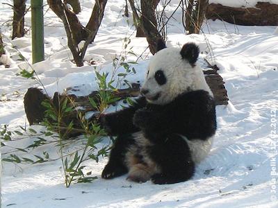 Fu Hu, 12. Februar 2012