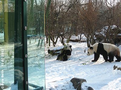Fu Hu und Yang Yang, 12. Februar 2012