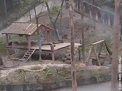 ... und macht dort ein Nickerchen! Fu Long in Bi Feng Xia, 7. Februar 2012 (Screenshots von Pandacam)