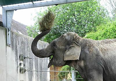 Heu-werfen macht allen Elis Spaß! Mary, Mai 2010
