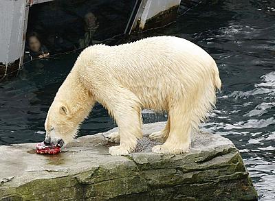 Für Arktos gab es auch eine Abschiedstorte ...
