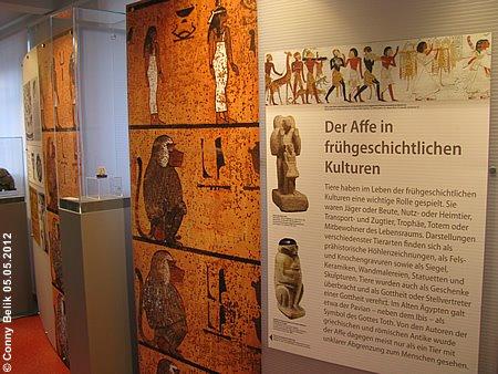 Interessant aufbereitet, mit zahlreichen bemerkenswerten und faszinierenden Exponaten! Ausstellung Affe und Mensch, Galerie Affenhaus, 2. Mai 2012
