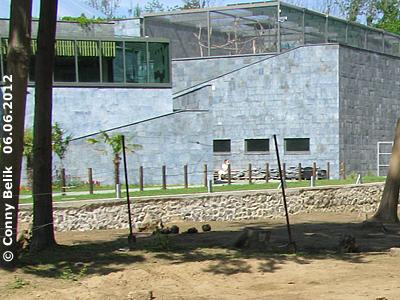 Blick auf die begehbare Voliere auf dem Dach der Grünen Pyramide, darunter die Innenanlagen der Asiatischen Elefanten und Panzernashörner, Sóstó Zoo, 6. Juni 2012