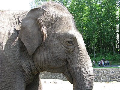 Motki, Sóstó Zoo, 6. Juni 2012