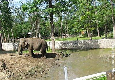 Buddeln macht auch alten Elis Spaß! Sóstó Zoo, 6. juni 2012