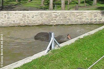 So ein entspannendes Bad ist eine tolle G'schicht! Sóstó Zoo, 6. Juni 2012