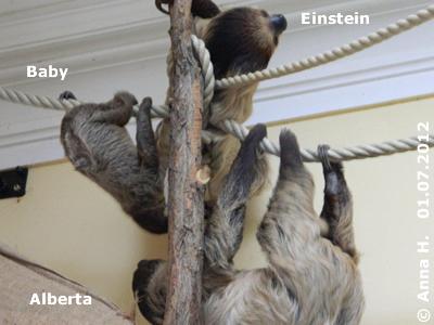 Familie Faultier, 1. Juli 2012