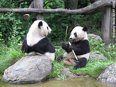 Panda-Bub Fu Hu, 23 Monate alt, mit Mama Yang Yang, 22. Juli 2012