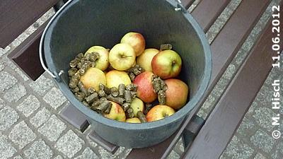 Die BEsucher dürfen während der Fütterung zur großen Freude der Elis Äpfel und Pellets in die Anlage werfen, 11. Juni 2012